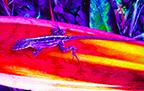 Long Purple Gecko