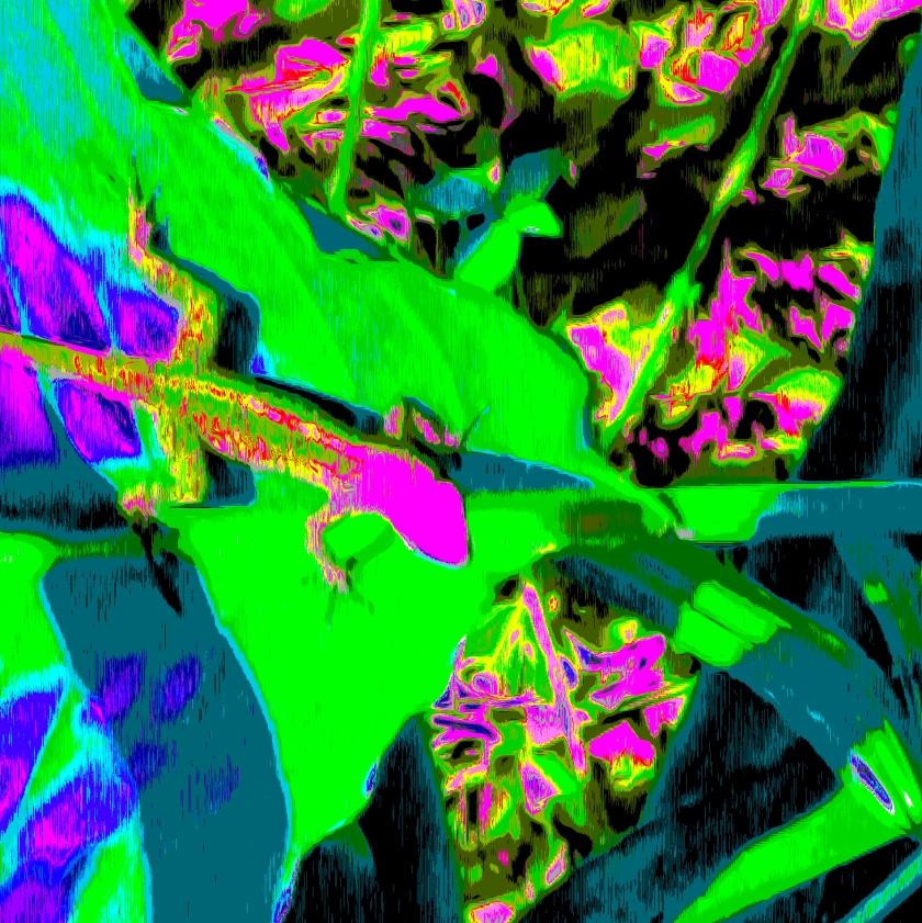 Leafy Gecko