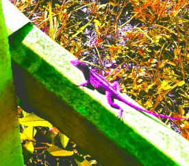 Gecko on a Fence