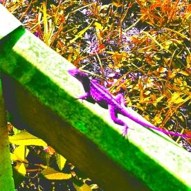 Gecko on a Fence