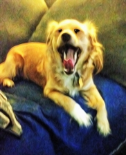 Cookie yawning