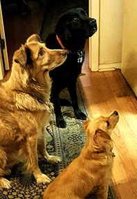 Waiting for treats-1