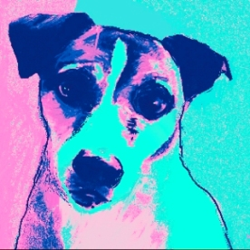 baxter pink 2
