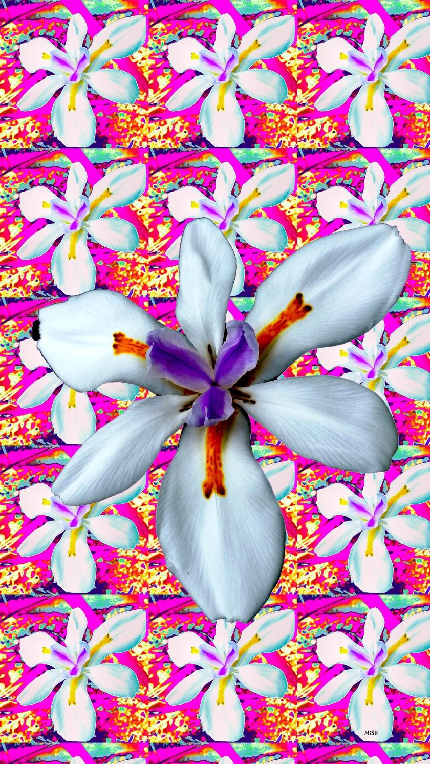 iris pink new