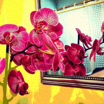 orchids in the mirror